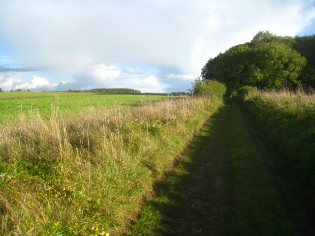 Wayfarer's Walk - south of Cheesedown Farm