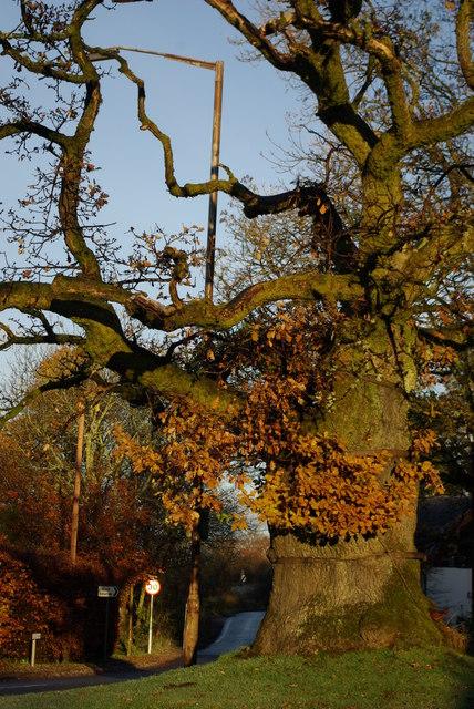 Clachan Oak, Balfron