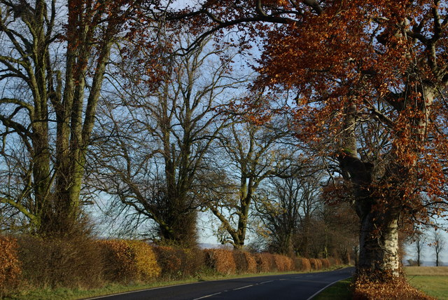Tree-lined A811 west of Lower Ballaird