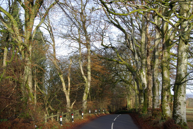 Tree-lined B835 near Arnfechlach Bridge