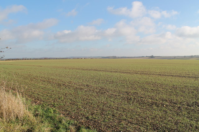 Farmland near Withcall