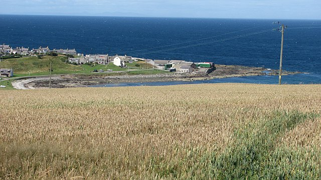 Wheat, Portsoy