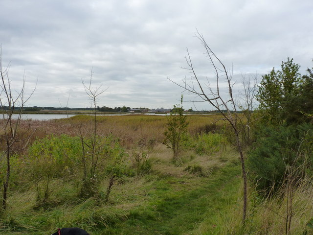 Reedbeds and woodland plantings