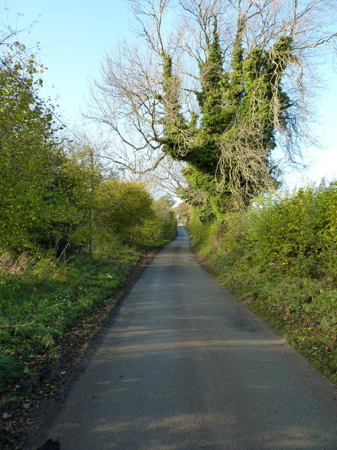 Ash trees and a country lane