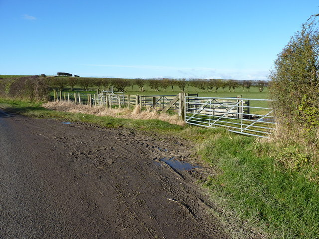 Sheep pens beside the road