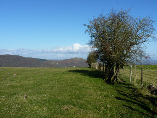 The border hedge