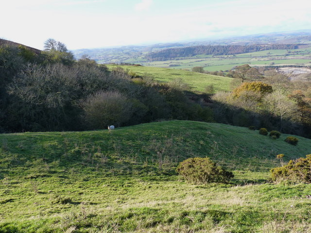 Sheep grazing above Upper Heldre