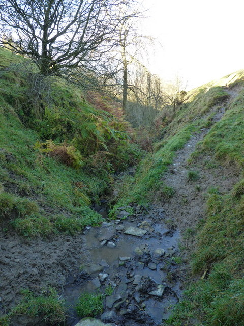 In the upper gully of the stream
