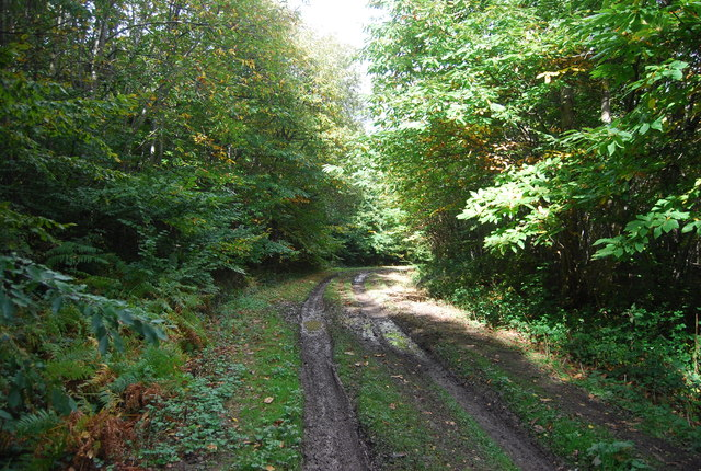 Footpath in Rochester Forest
