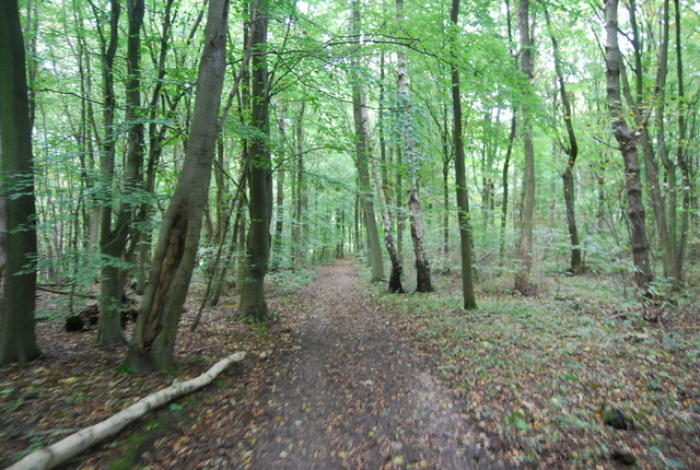 North Downs Way, Wingate Wood