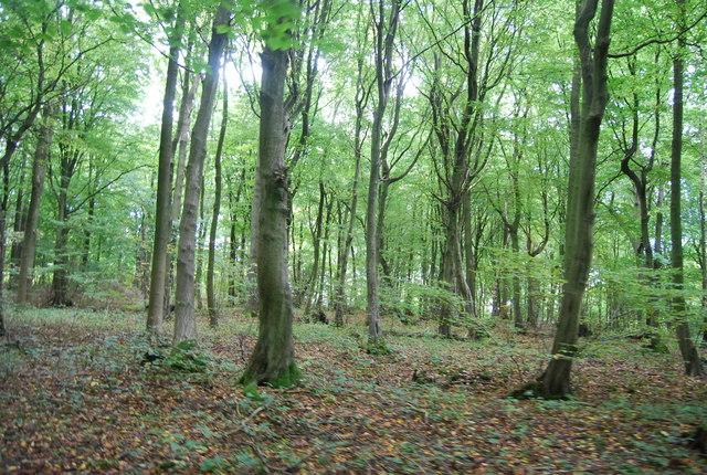 Wingate Wood