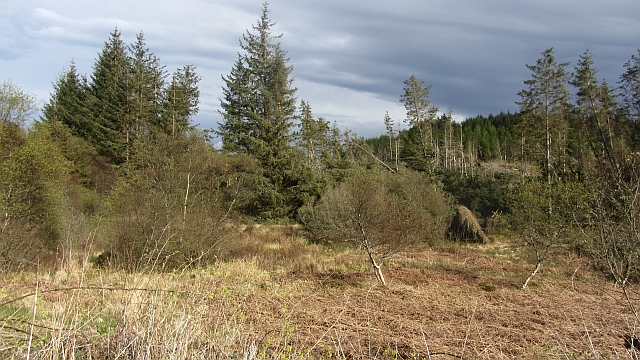 Forestry, Kirnashie Hill