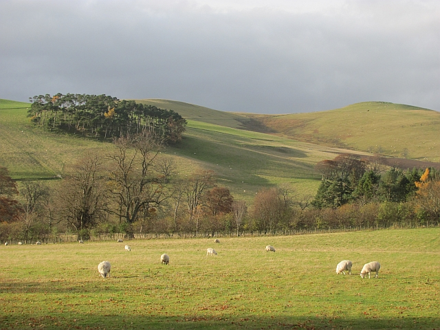 Sheep, Broughton Place Farm
