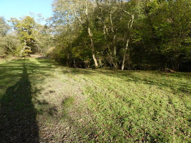 Marshy field near Rhos Goch