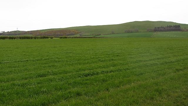Spring grassland