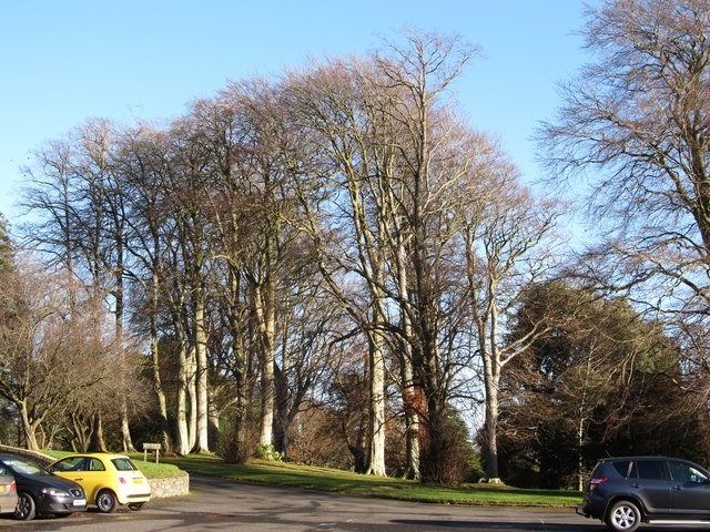 Trees next to the car park at Tollymore Forest Park