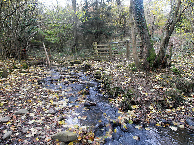Stream at Brimford Woods