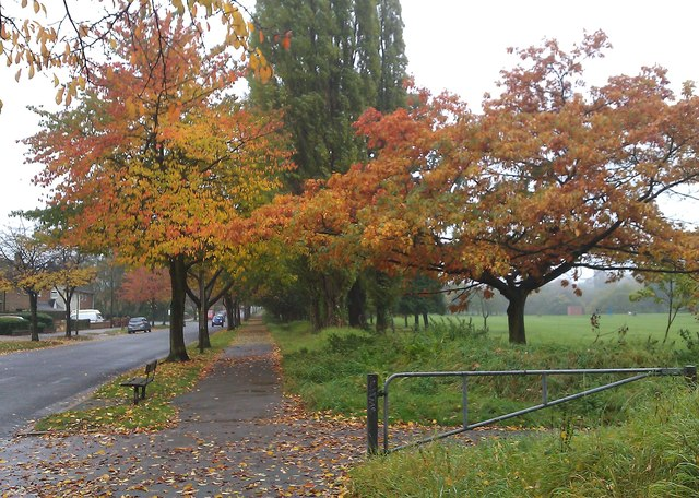 Autumn colours along Braunstone Avenue