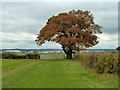 TQ3998 : Field corner oak by Robin Webster