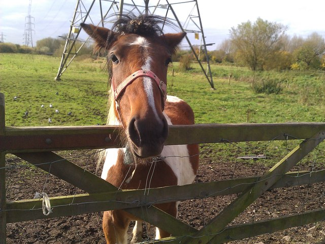 Friendly horse along Braunstone Lane East