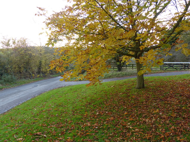 Autumn along Ingarsby Lane