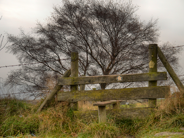 Stile and Tree (Cown Edge Way)