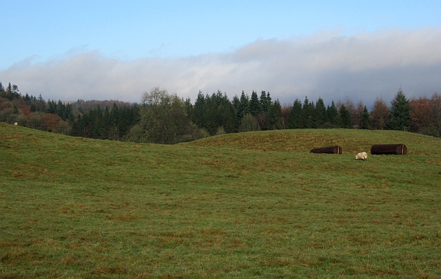 Drumlanrig Park