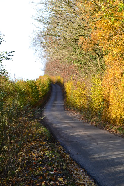 Autumn colours on Furzedown Road