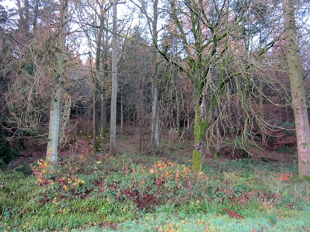 Tibbers Wood