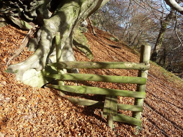 Stile in Beech woods