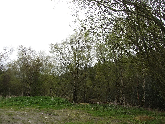 Gwernant Wood
