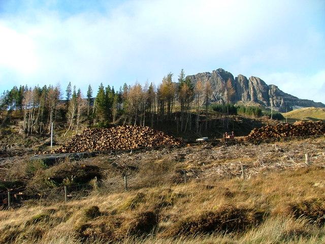 Forestry work below The Storr