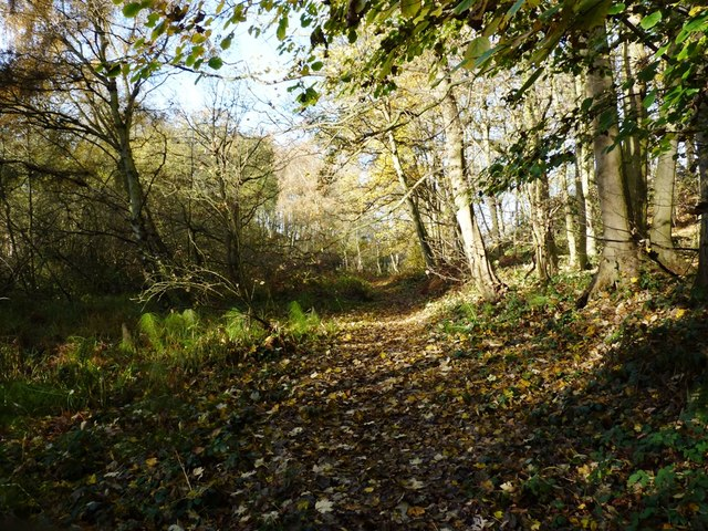 Bridleway through the woods