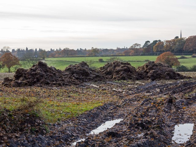 Steaming manure heaps off Nuthurst Road