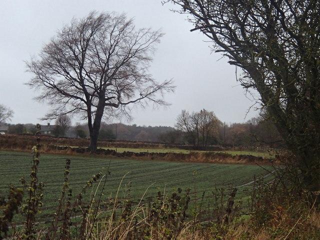Field by Shorts Lane