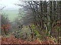 SK2881 : Woodland edge below the A625. by Andrew Hill