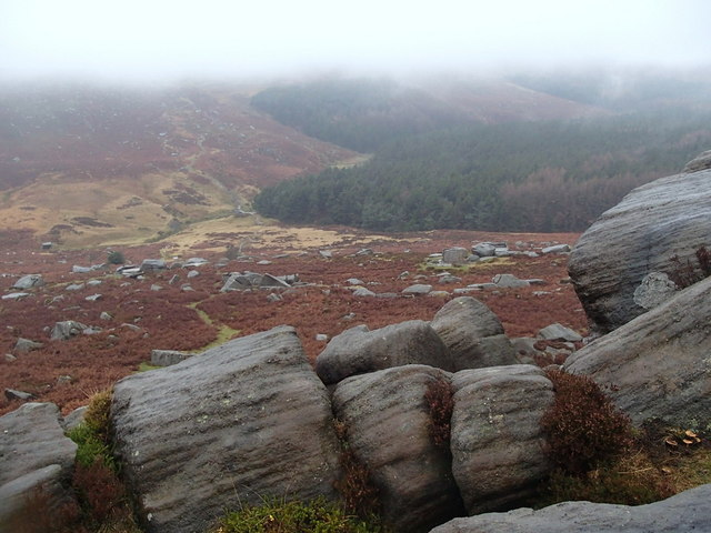 Rocks, heather and forest