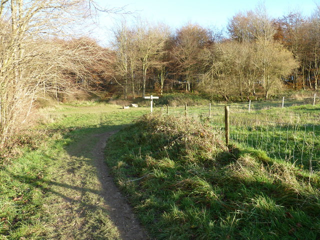 Bridleways crossing on Stoughton Down