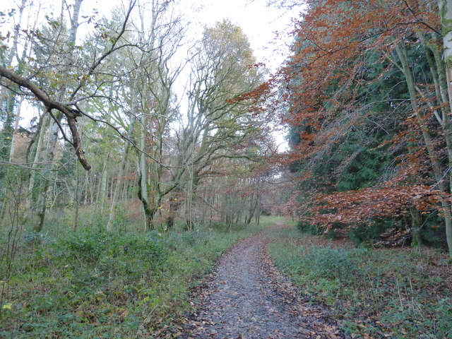 Bridleway in Greatdean Bottom