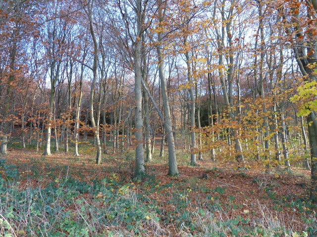 Trees on the lower slopes of Lambdown Hill