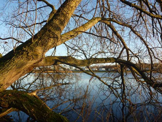 East Lothian Landscape : An Autumn Morning At Seafield Pond