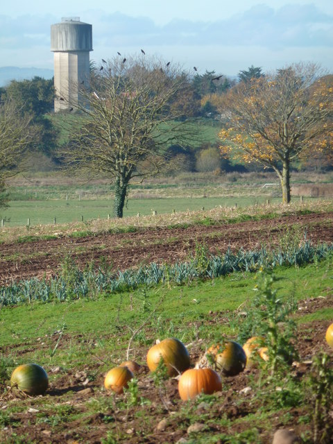 Pumpkins and water tower