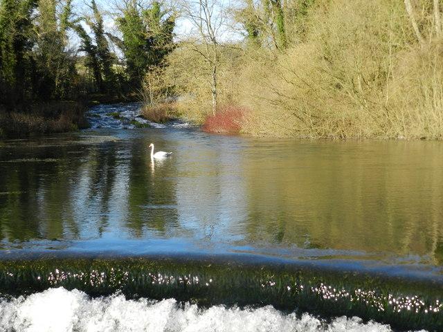 Swan and weir, Raper Bridge
