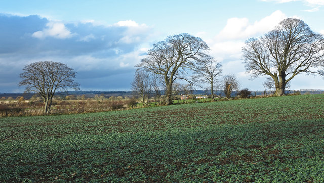 Field with crop on north-west side of bridleway