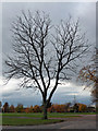TQ3174 : Tree, Brockwell Park by Stephen Richards