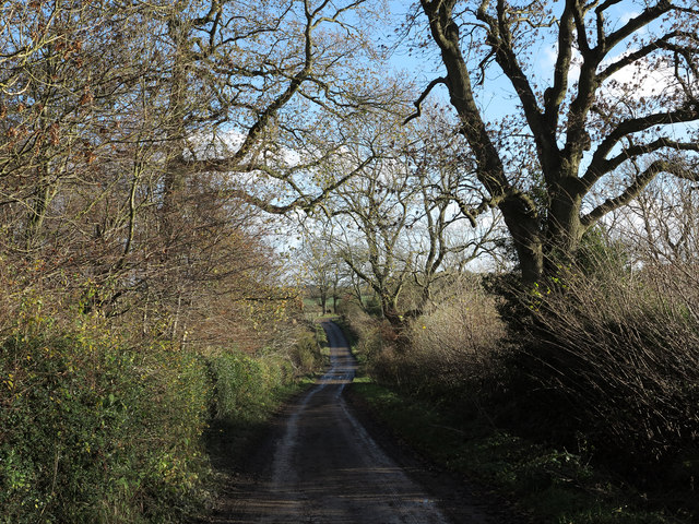 Lane heading towards Bolton Garths