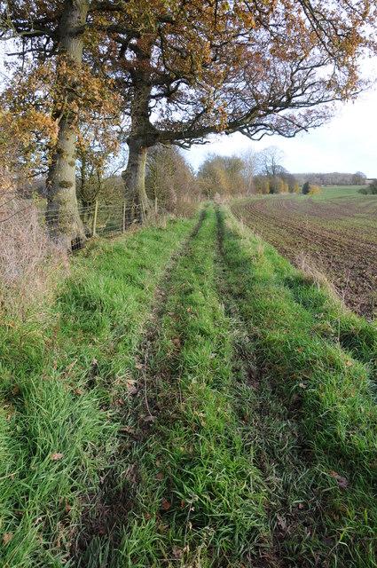 Bridleway near Marston Firs