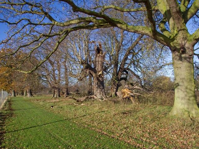 Public footpath through Charlecote Park