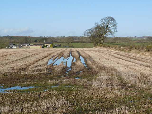 Field of stubble off Miller's Lane