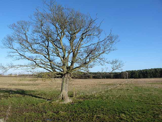 Wayside tree